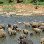 The Elephant Orphanage