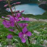 Flowers and Grinnell Lake