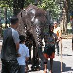 les elephants sacres
