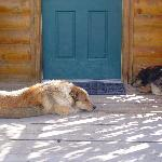 Zip & Bandit guarding our cabin