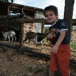 Gabriele e le capre