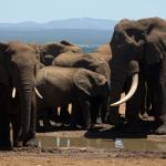 Our day in the Addo Elephant Park