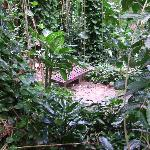 The Rain Forest section