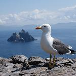 The view of Little Skellig