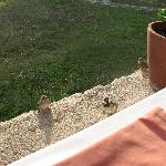 Sparrows asking to share breakfast