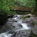 Foto de Termales del Bosque