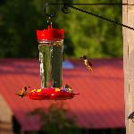 Multi-coloured humming birds