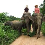 Riding the elephants through the sanctuary property