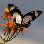 visite chez les papillons