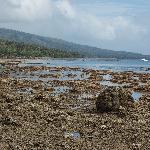 Coastline at low tide.