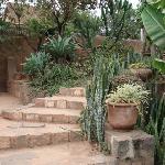 Another part of their garden