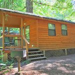 Luxury cabins in the Redwood forest