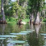 Les bayous