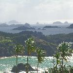 Kauri view