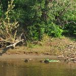 Beavers and their homes -  I wish I had a better camera!