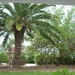 vue de notre chambre sur les jardins