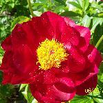 Beautiful Flowers Everywhere
