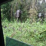 A common sight! Wild elephants standing on the road side.