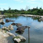 Subtropical Plant Paradise Yubujima Island