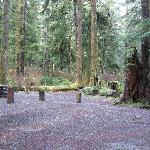 Example of a campsite at Mora Campgrounds December 2008.