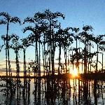 Sunset upon the flooded forest