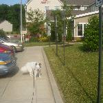 Casper, my dog, at the front of the hotel