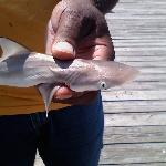 My husband holding a baby shark