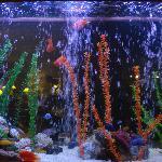 Aquarium, Febeach 12 July 2009