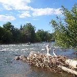 Animas River behind motel