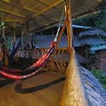 hammock area.