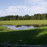 The pond at Auchenlaich Farmhouse