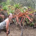 monster aloe plant in Botanical Gardens