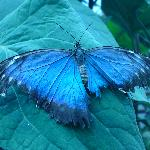One of the more common types of butterfly in the farm