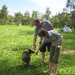 A nearby kangaroo