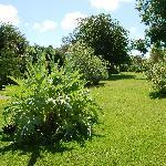 massive garden