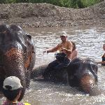 Bath time with the volunteers and Mahoots (Elephant handlers)