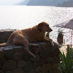 the hotel's dog... near the dock