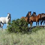 Horses at Rocking Z ranch