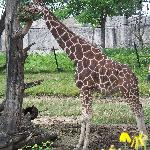 You can feed the giraffes if you are there at the right time