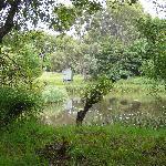 Duck pond next to the hut