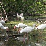 Florida Keys Wild Bird Rehabilitation Center Foto