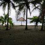 palmeras en playa