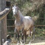le bonheur des amateurs de chevaux