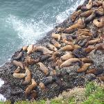sea lions at viewpoint