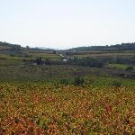 View of Minervois vines from Les Aliberts