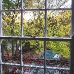 Looking out on the fall colours in the courtyard
