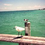 Birds on Rod & Reel Pier