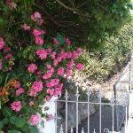 """The entrance Gate and """"Old Worlde"""" Roses in the """"Waverley Terrace Garden"""" = the gate also leads"""