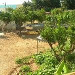 the garden/vegetable garden with hen-house