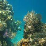 Snorkeling West Bay